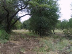 ecosistema-sudafrica-23